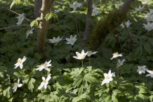 Read more about the article A is for Anenome