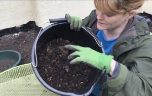 Sustainable gardening: making compost & biodegradable pots from newspaper or toilet roll tubes