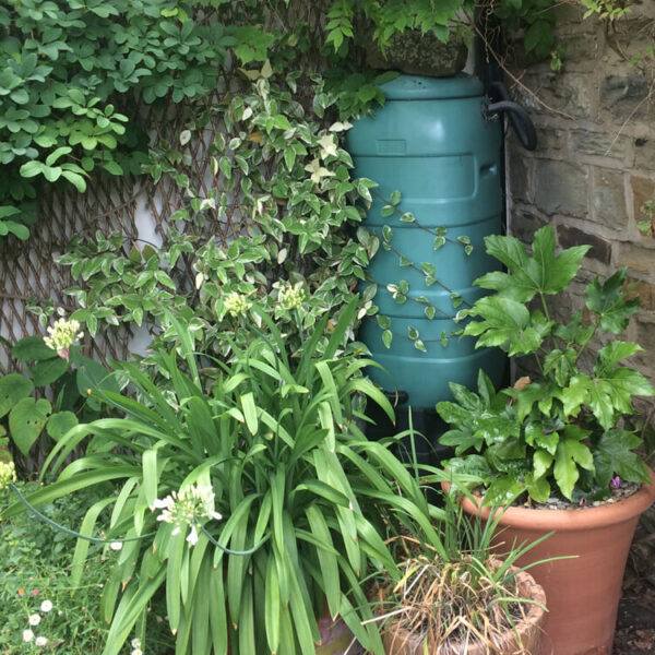 How to garden sustainably and resourcefully