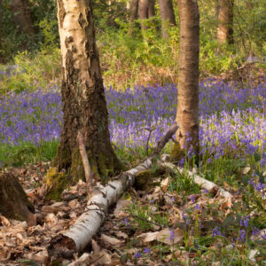 Trees and Woodlands – Learn Photography Online