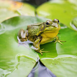 Creating a wildlife pond – Learn Online