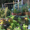 Advanced vegetable growing: crop rotation and sustainable management