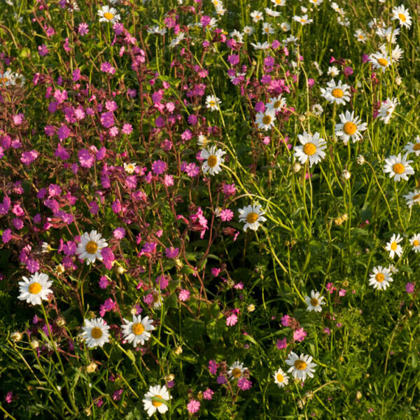Making meadows and wildflower gardens