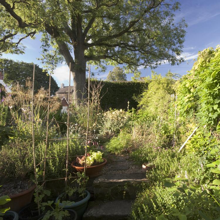 """""""wildlife gardening"""