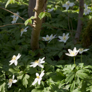 Creating a woodland garden – Learn Online