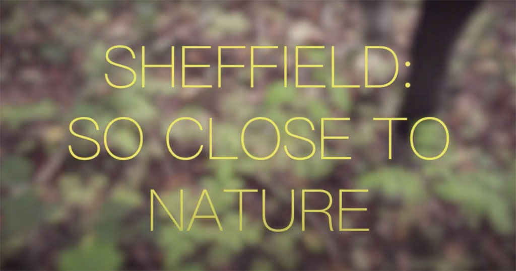 Sheffield - so close to nature